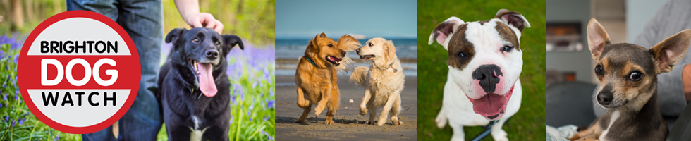 Brighton Dogwatch